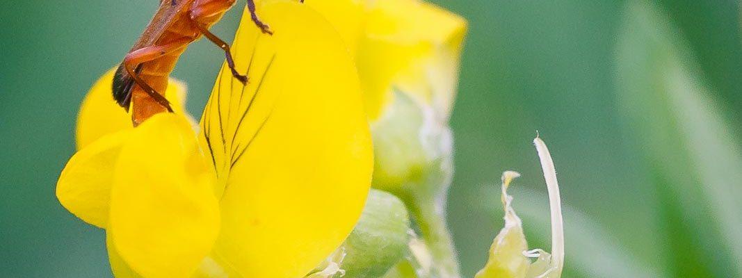 Insecten bij Kinderdijk